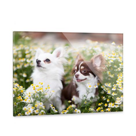 "24x16"" Acrylic Photo Print"