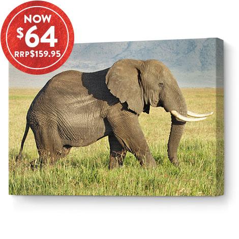 50x75cm Classic Canvas
