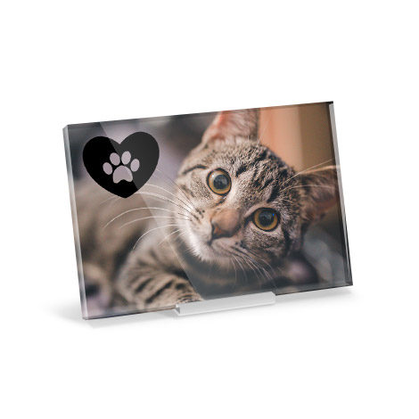 Acrylic print with image of a cat